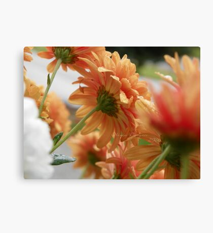 Mum Searching for Sunlight Canvas Print