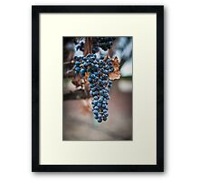Grape Cluster Framed Print