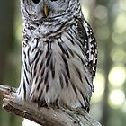 Beautiful Owl by Marylou Badeaux
