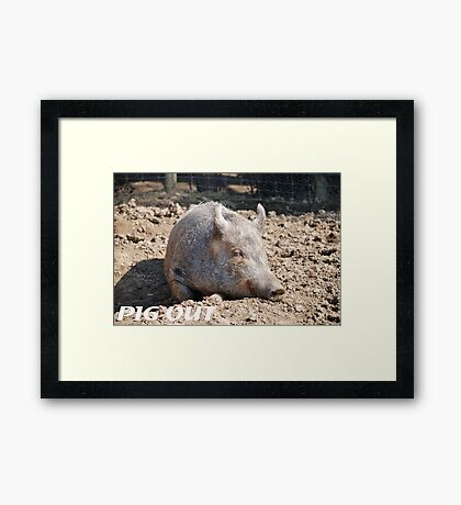 Pig in mud with pig out slogan Framed Print