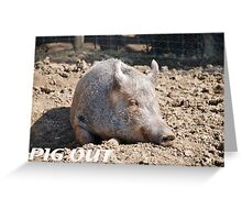 Pig in mud with pig out slogan Greeting Card
