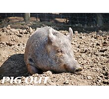 Pig in mud with pig out slogan Photographic Print