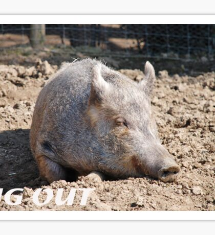 Pig in mud with pig out slogan Sticker