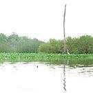 Armand Bayou Panorama with Egret by v Sinn v