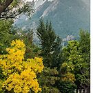 Flatirons Fall Silhoette by nikongreg