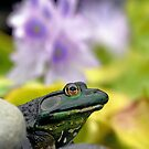 Stop and Smell the Hyacinths by Sharon Woerner