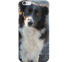"""Border Collie """"Maggie"""" iPhone Case/Skin"""