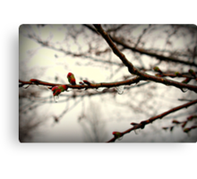 Iced Blossoms Canvas Print