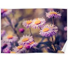 Aster Poster