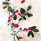 Feative Red Berries by LouiseK