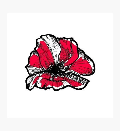 Ruby red poppy Photographic Print