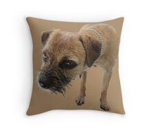 Young female border terrier Throw Pillow