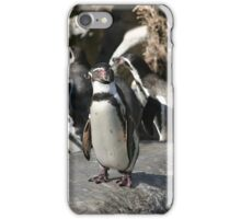 Humboldt Penguin iPhone Case/Skin