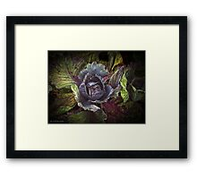 Whispers from the Cabbage patch Framed Print