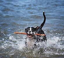 Dog Days Of Summer by Laurie Minor