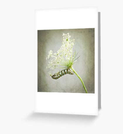 Swallowtail Caterpillar on Queen Anne's Lace Greeting Card