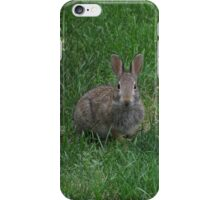 Cottontail Rabbit #2 - V1 iPhone Case/Skin