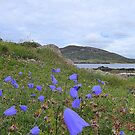 Irish Harebells by Fara