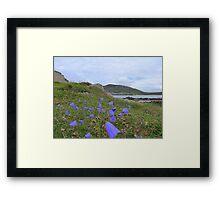 Irish Harebells Framed Print