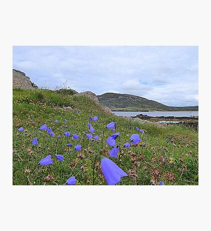 Irish Harebells Photographic Print