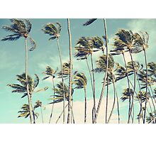 Hawaii Palm Trees In The Wind Photographic Print