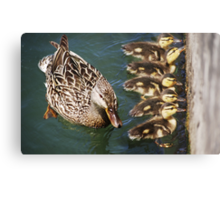 Getting Your Ducks In A Row.... Canvas Print