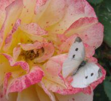 Cabbage Butterfly #2 - V1 Sticker