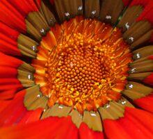 Macro capture of Orange Zinnia flower Sticker