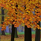 Top selling . Views: 16936 ♥ ♥ ♥ series . Forever Autumn   . Eye-catcher - For Sure ! Fav: 76.  Thx friends ! muchas gracias !!! This image Has Been S O L D . Buy what you like!  by © Andrzej Goszcz,M.D. Ph.D