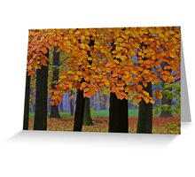Top selling . Views: 16936 ♥ ♥ ♥ series . Forever Autumn   . Eye-catcher - For Sure ! Fav: 76.  Thx friends ! muchas gracias !!! This image Has Been S O L D . Buy what you like!  Greeting Card