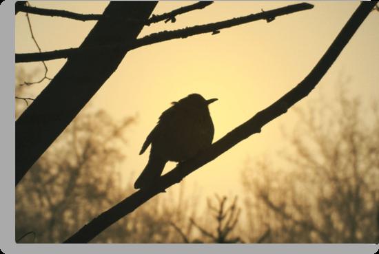 Bird Silhouette by ienemien