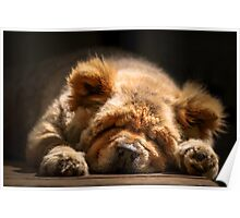 Snooze - Ms Tea Chow-Chow Poster