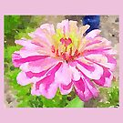 Pink Zinnia by Caren