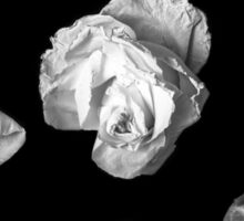 Decaying Roses Sticker