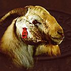 Billy goat Boer  by Clare Colins