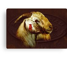 Billy goat Boer  Canvas Print