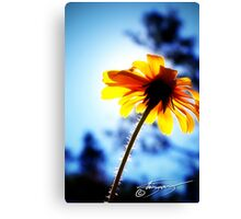 Some Kind of Sunflower Canvas Print