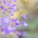 Lobellia by Bloom by Sam Wales