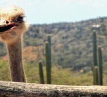 Costa Rican Ostrich Sticker