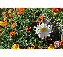 floral freshness/Frescor floral Photographic Print