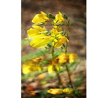 Windsong Photographic Print