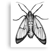 Wasp Moth Canvas Print