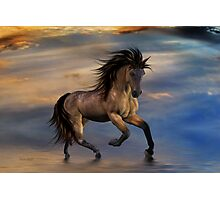 Cosmic .. Wild Stallion Photographic Print