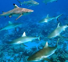Sharks a Plenty by Seesee
