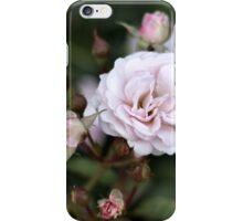 Pink Rose Blooms iPhone Case/Skin