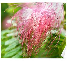 Costa Rican Pink Flower Poster