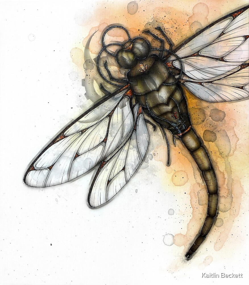 Masked Dragonfly by Kaitlin Beckett