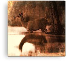 Wade on the water Canvas Print