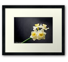 Jonquills are early this year Framed Print