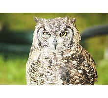 Suspicious Owl  Photographic Print